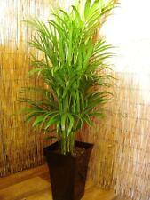 1 EVERGREEN Aloe Vera Naturale Casa Ufficio delle piante da interno Bianco lucido MILANO Pot