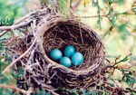 A Robin s Nest of Antiques