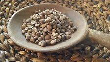 10g Fresh! 100+ Hawaiian Baby Woodrose Seeds (Argyreia Nervosa)