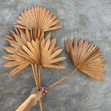 Sun Palm Leaf