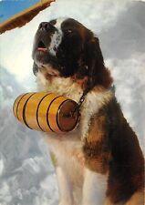 Br43931 Chien St Bernard dog animaux animals