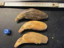 Höhlenbär, Cave bear, Ours des cavernes, Ursus spelaeus