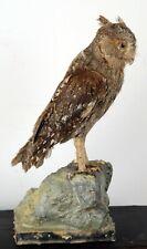 More details for scops owl