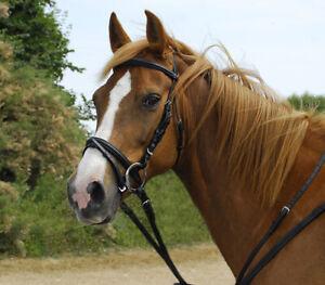 Windsor Leather BRIDLE with FLASH Noseband + Reins | Cob Full Pony Black Havana