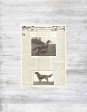 Antique Bird Dog Irish Gordon English Setter Pointer Manchester Terrier Article