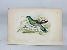 DELUXE ED Hand-colored Plates 1840 Jardine History Hummingbirds #15 Violet Tuft