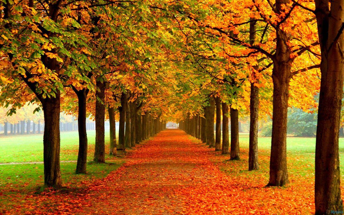 autumnzplace