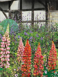 """ACEO Original """"The Lupins"""" Collage & Painting, Hélène Howse"""