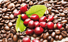 20 Seeds Coffee Bean Tree Rare 8 Kinds Bonsai Plants Exotic Aromatic in Garden