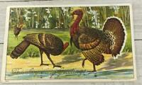 VINTAGE 1911 THANKSGIVING DAY TURKEY EMBOSSED POST CARD POSTCARD