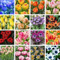 100Pcs Rare Tulip Seeds Beautiful Flower Floral Home Garden Plant Decor Surprise