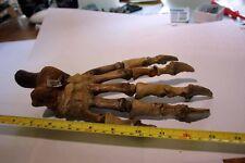 B.J.F.   Fossil CAVE BEAR Paw  belonging to Ursus spelaeus Large