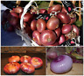 Onion Seeds Spanish Gourmet Red / Purple SWEET  Cebolla Chata