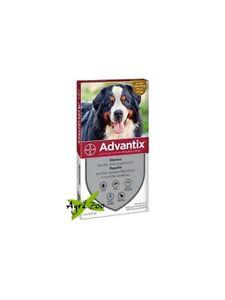 Advantix Bayer 4 pipette per cani da 40 - 60 kg - oltre 40 kg fino a 60 kg