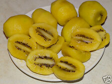 50 Seed Yellow Golden Kiwi Fruit VerySweet Flesh Actinidia chinensis Smooth Skin