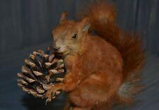 Taxidermy Red squirrel Stuffed Hunting trophy Handmade