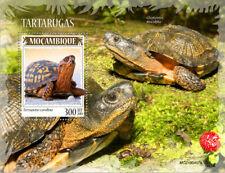 Mozambique 2019   fauna turtles S201910