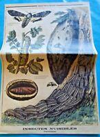 XIX Ancienne Gravure Insectes Nuisibles Crépusculaires Bombyx Sphinx tête Mort