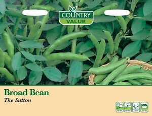 Broad Bean The Sutton Seeds (35) Country Value by My Fothergill's