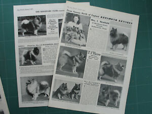 KEESHOND DOG BREED KENNEL CLIPPINGS 1940s -1970s x 35