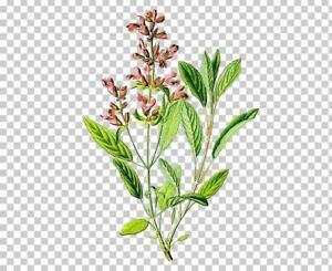 FREE POSTAGE 100 ml Sage Flower Fragrance 100 ml  Free Post Sage Flower