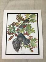 1964 Print Canada Jay Bird Audubon's Book of Birds of America LARGE Folio