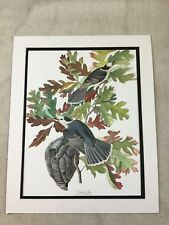 Vintage Print Canada Jay Bird Audubon's Book of Birds of America LARGE Folio