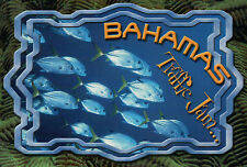 A School of Jacks in the Bahamas, Traffic Jam, Blue Ocean and Fish --- Postcard