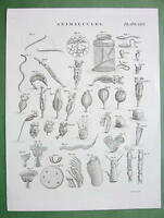 ANMALCULES Miniscule Animals Magnified - 1823 Copperplate Engraving Print