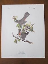vintage AUDUBON Octavo  Cat Bird  Lith & Printed by Endicott