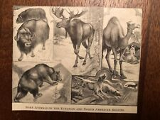 "Vintage Engraving Print of NORTH AMERICAN Animals Unframed 3.5"" x 4.25"""