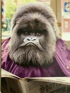 Avanti Happy Father's Day Greeting Card Funny Gorilla Gray Hairs Dad