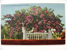 Linen Postcard Bougainvillae Florida C Teich New c.1946