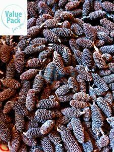 (Value Pack) Alder Cones Organic Crystal Cherry Shrimp PH Buffer Adjustment