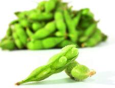 20 Edamame Seeds Green Soy Bean SoyBean Organic Vegetables