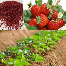 100pcs Red Strawberry Climbing Strawberry Fruit Plant Seeds Home Garden KC