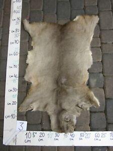 Roe deer skin, tanned skin, fur, trophy, taxidermy, carpet, pelt