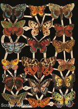 German Embossed Scrap Die Cut Relief - Colorful Butterflies / Moths   EF7221