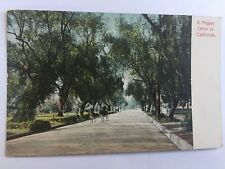 A Pepper Drive in California Riding horses in street trees Vintage Postcard A20