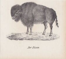 Bison bonasus Wisent LITHOGRAPHIE von 1831 Brüggemann Schinz Wildrinder