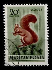 Eichhörnchen. 1W.  Gest. Ungarn 1953