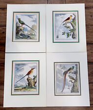 "4 French Matte Hand Colored Bird Engravings by C. Haussard 10X7.5"" W/o Matt"