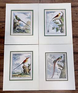 "4 French Matte Hand Colored Bird Engravings by C. Haussard 10X7.5"" W/o Matt"