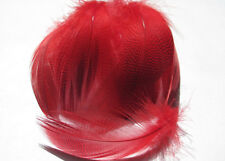 Barred Mallard Feathers - Red