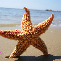 NE_ HB- 2Pcs Natural Dried Starfish Sea Star Beach Craft Wedding Party Home Deco