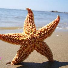 JN_ HB- 2Pcs Natural Dried Starfish Sea Star Beach Craft Wedding Party Home De