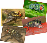 © ART - Ltd.Ed. set of 4x insect fly ACEO Art collector cards by Di