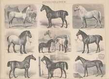 PFERDE Araber Belgier Percheron HOLZSTICH von 1885 Shetlandpony Percheron