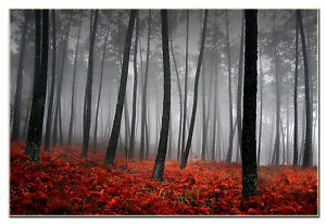 Large Autumn Red Leaves in Forest Wall Art Framed and Ready to Hang
