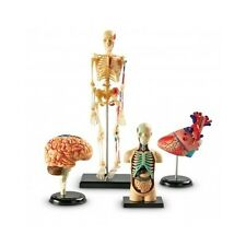 Human Body Anatomy Model Heart Brain Skeleton Organs 4d Science Lab Medical Set